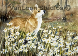 "Pembroke Welsh Corgi "" Daisies And Butterfly"""