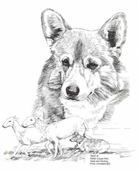 "Pembroke Welsh Corgi ""Herding and Head Study"""