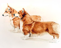 "Pembroke Welsh Corgi ""Pair"""