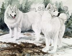 "Samoyed ""Snow Scene Adults"""
