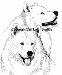 "Samoyed ""The Pair"""