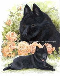 Schipperke with Peach Roses