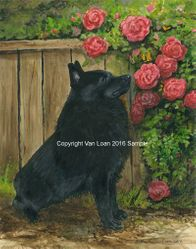 Schipperke With Pink Roses