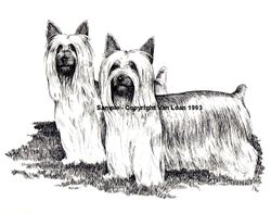 "Silkie Terrier ""The Pair"""