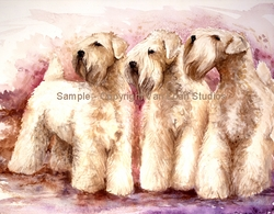 "Soft Coated Wheaten Terrier ""Montgomery Aire"""