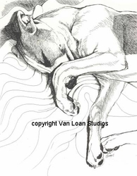 """Whippet """"Sleeping Curled Up"""""""