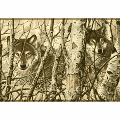 874425 Wolves Peeking from Birch Trees Wallpaper Border WD4170b