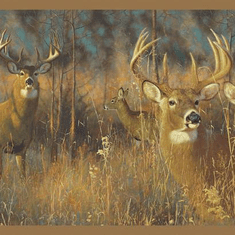 875996 White Tail Deer Wallpaper Border WG0346bd