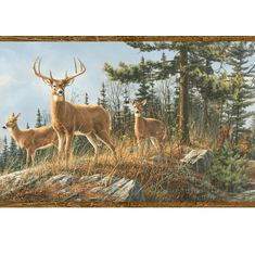 878314  Whitetail Crest Wallpaper Border