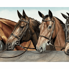 879577 6 Inches Wide Horses at Fence Mural-Style Border BE11161MB-6