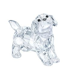 (SOLD OUT) Labrador Puppy, standing