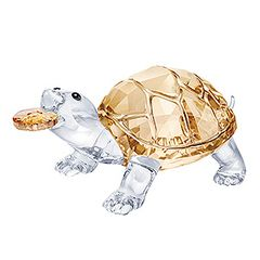 (SOLD OUT) Tortoise