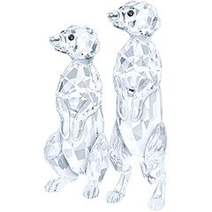 (SOLD OUT) Meerkats