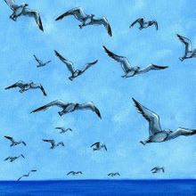 Shore Life in Flight - Print