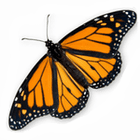 Butterfly Release Wedding Packages