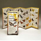 Common Butterflies Of Florida Folding Guide