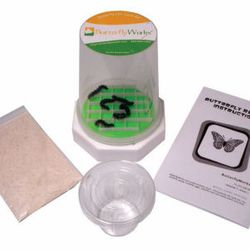 Painted Lady Caterpillar Growing Kit 5 Count