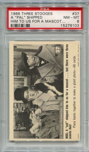 """1966 Three Stooges - A """"Pal"""" Shipped Him To Us For A Mascot #37 PSA 8"""