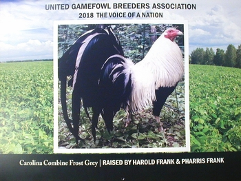 Calendar 2019  UGBA  (need new pictures)