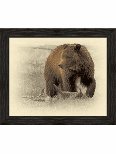 Grizzly Bear- Framed Wrapped Canvas