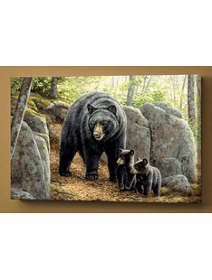 Northwoods Springtime – Black Bears Wrapped Canvas