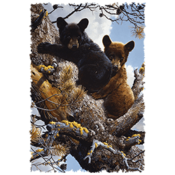 Animal Wildlife T Shirts Wholesale Bear T Shirts - 22799HD2