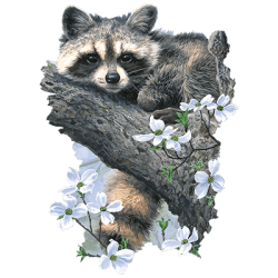 Animal Wildlife T Shirts - Wholesale Raccoon T Shirts -22888HD2