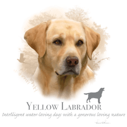 Best Online Shopping Bulk Wholesale Yellow Labrador Dog Pet Cat Animal Lovers T Shirts - MSC Distributors