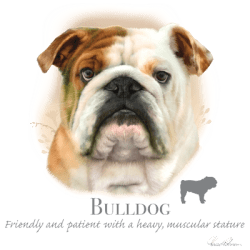 Shop Online Bulk Wholesale Bulldog Dog Pet Cat Animal Lovers T Shirts - MSC Distributors