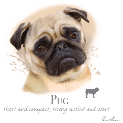 Best Online Shopping Bulk Wholesale Pug Dog Pet Cat Animal Lovers T Shirts - MSC Distributors