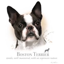Shop Online Bulk Wholesale Boston Terrier Dog Pet Cat Animal Lovers T Shirts - MSC Distributors