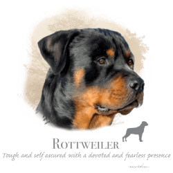 Best Online Shopping Bulk Wholesale Rottweiler Dog Pet Cat Animal Lovers T Shirts - MSC Distributors