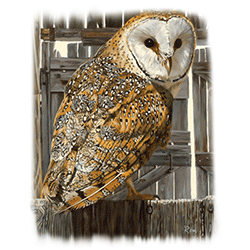 Animal Wildlife T Shirts Wholesale Merchandise - Owl T Shirts - MSC Distributors