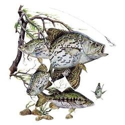 Custom Crappie Fishing Clothing, Wholesale T Shirts, Bulk Suppliers - a10584e