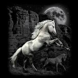 Animal Wildlife T Shirts Wholesale Merchandise - Horse T Shirts - MSC Distributors