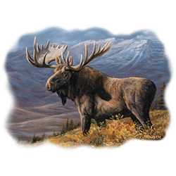 Wholesale Wildlife Moose Clothing Apparel Officially Licensed Wildlife Caps T Shirts Bulk Cheap Suppliers - MSC Distributors