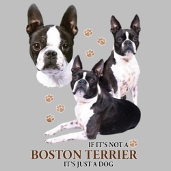Wholesale Dog T Shirts Suppliers - Boston Terrier