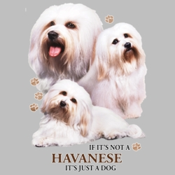 Wholesale Dog T Shirts Suppliers - Havanese