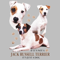 Wholesale Dog T Shirts Suppliers - Jack Russel Terrier - 21381HD4