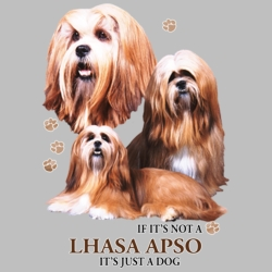 Wholesale Dog T Shirts Suppliers - Lhasa Apso - 21382HD4
