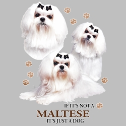 Wholesale Dog T Shirts Suppliers - Maltese - 21383HD4