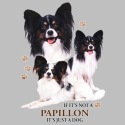 Wholesale Dog T Shirts Suppliers - Papallon - 21387HD4