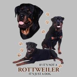 Wholesale Dog T Shirts Suppliers - Rottweiler - 21392HD4