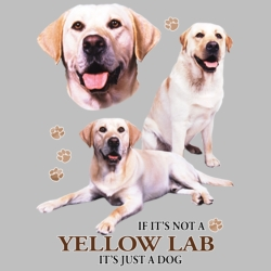 Wholesale Dog T Shirts Suppliers - Yellow Lab