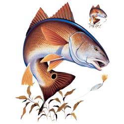 Wholesale Fishing Redfish T Shirts - Buy Cheap in Bulk from USA Suppliers  - MSC Distributors