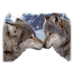Animal Wildlife T-Shirts - Wolves T Shirts - MSC Distributors