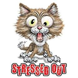 Funny Stressed out Cat T Shirts - a1098j