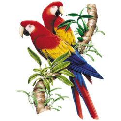 Animal Wildlife T Shirts Wholesale Merchandise - Parrot T Shirts - MSC Distributors