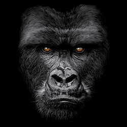 Animal Wildlife T Shirts Wholesale Merchandise - Gorilla T Shirts - MSC Distributors