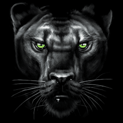 Animal Wildlife T Shirts Wholesale Merchandise - Panther T Shirts - MSC Distributors